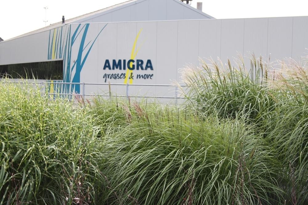 Amigra uit Honselersdijk