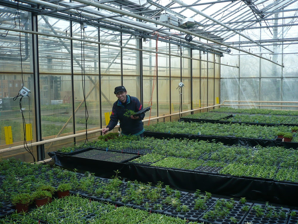 Nieuw event Garden Trials and Trade focust op nieuw boomkwekerijsortiment