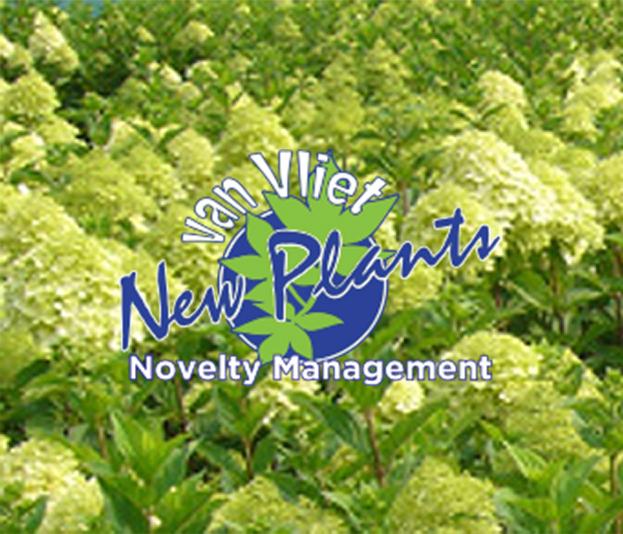van Vliet New Plants uit Stroe