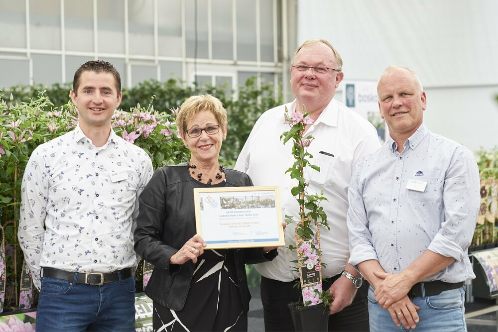 Clematis 'ST17333' (Multi Pink) Beste Nieuwigheid Garden Trials and Trade 2019