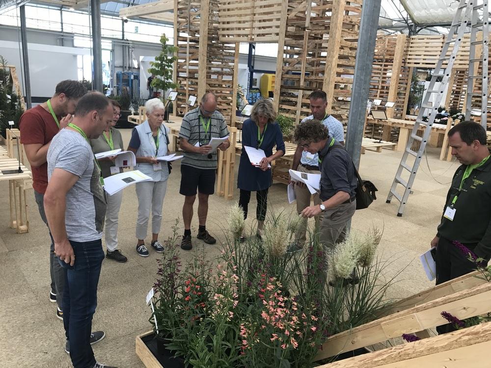 31 Noviteiten voor noviteitenkeuring op Garden Trials and Trade